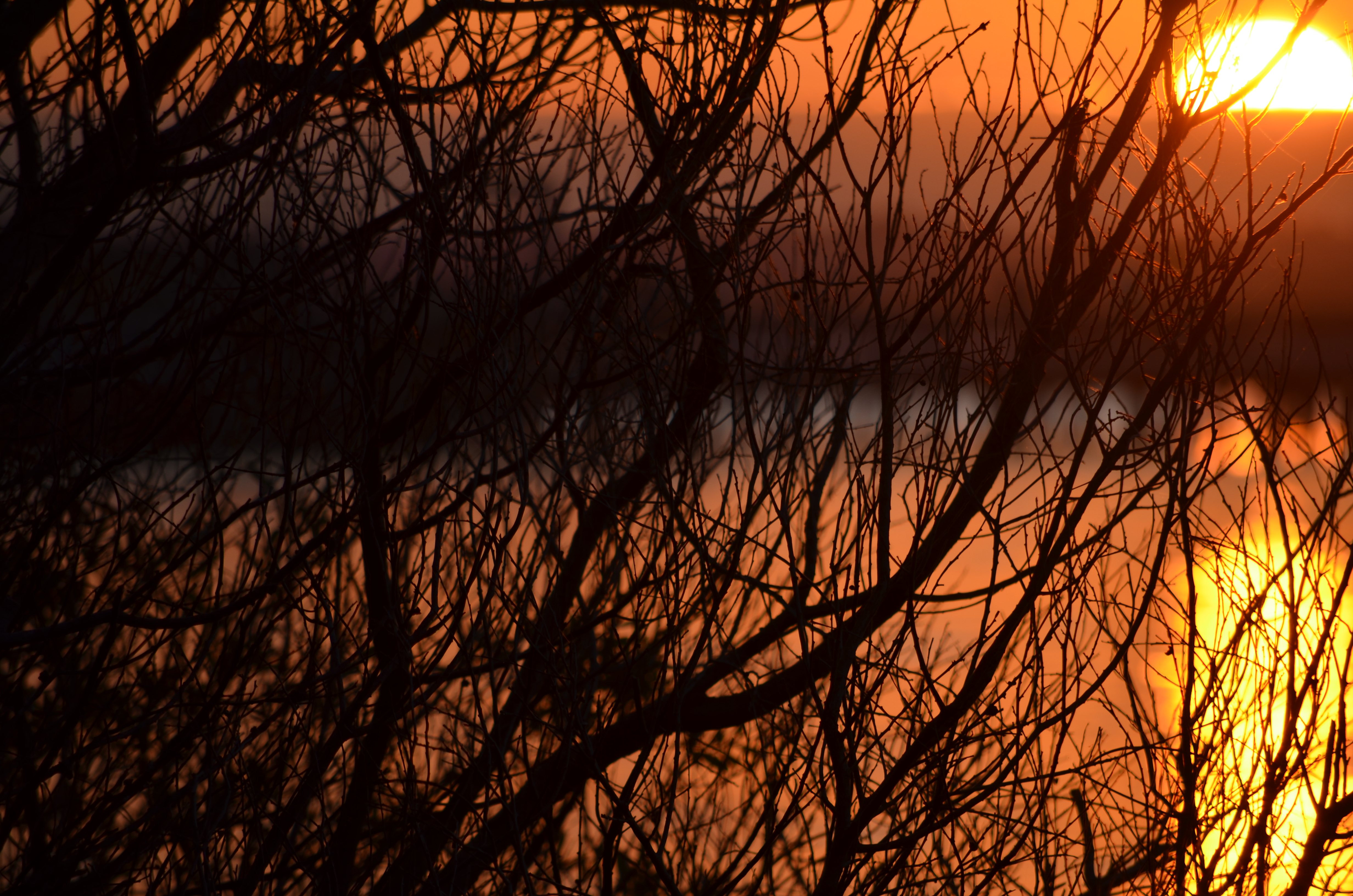 sunset branches desert island discs