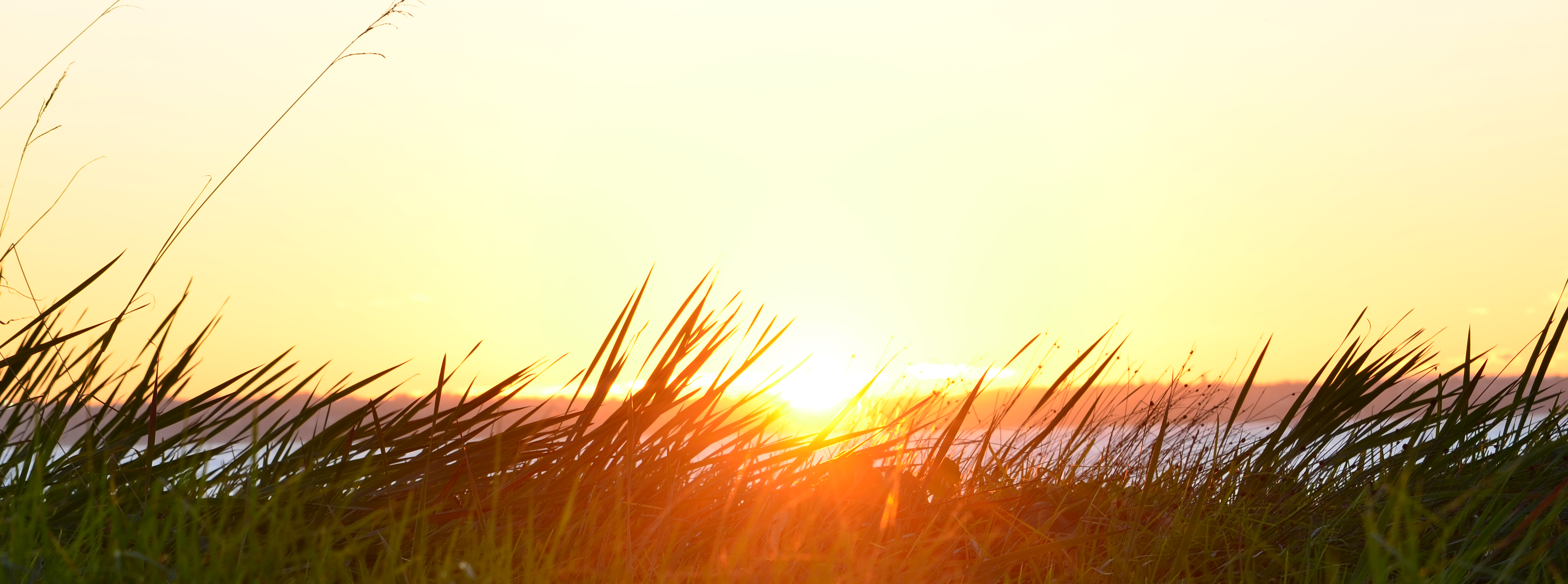 Sir Tim Smit stared, grass, field
